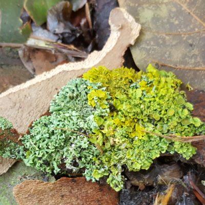 Lichen, London